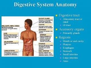 Digestive System Anatomy n Digestive tract n n