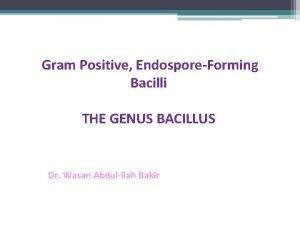Gram Positive EndosporeForming Bacilli THE GENUS BACILLUS Dr