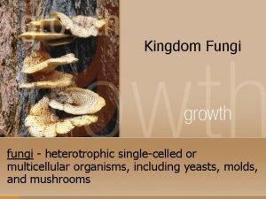 Kingdom Fungi fungi heterotrophic singlecelled or multicellular organisms