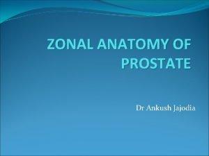 ZONAL ANATOMY OF PROSTATE Dr Ankush Jajodia Embryology