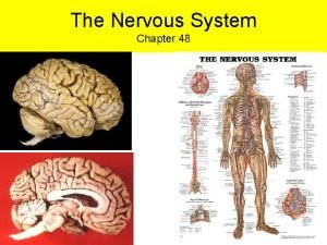 The Nervous System Chapter 48 Although the Nervous