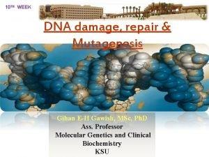 10 TH WEEK DNA damage repair Mutagenesis Gihan