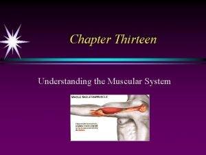 Chapter Thirteen Understanding the Muscular System Muscular Fitness