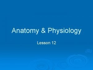Anatomy Physiology Lesson 12 THE MALE REPRODUCTIVE SYSTEM