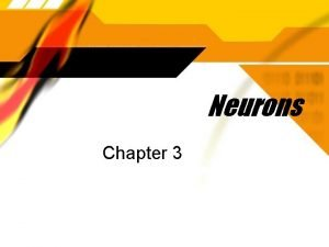Neurons Chapter 3 Dendrites Extensions from the neuron