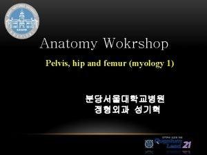 Anatomy Wokrshop Pelvis hip and femur myology 1