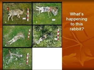 Whats happening to this rabbit Rabbit Decomposition http