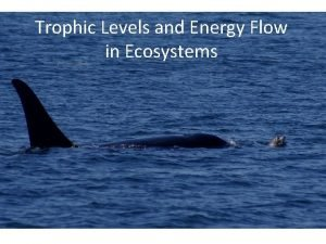 Trophic Levels and Energy Flow in Ecosystems Trophic