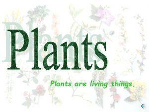 Plants are living things Plants have roots stems