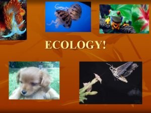 ECOLOGY n Ecology the study of interactions among