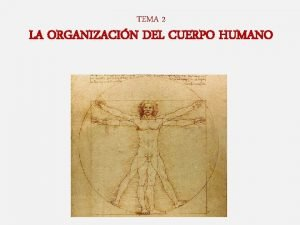 TEMA 2 LA ORGANIZACIN DEL CUERPO HUMANO Tema