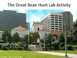 The Great Bean Hunt Lab Activity Meet the
