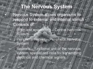 The Nervous System Nervous System allows organisms to