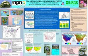 The USA NATIONAL PHENOLOGY NETWORK PHENOLOGY as an