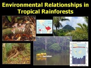 Environmental Relationships in Tropical Rainforests Climate Tropical Wet