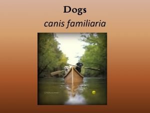 Dogs canis familiaria History Ancestor to entire dog