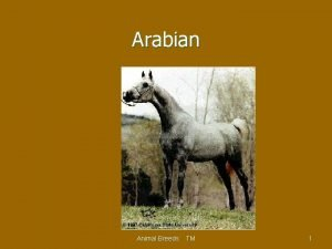 Arabian Animal Breeds TM 1 Appaloosa Animal Breeds