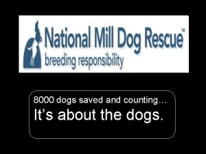 National Mill Dog Rescue 8000 dogs saved and