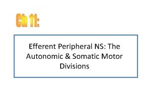 Efferent Peripheral NS The Autonomic Somatic Motor Divisions