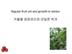 Regular fruit set and growth in winter Fruit