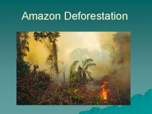 Amazon Deforestation The Amazon Region Concern about Amazon