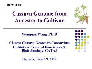 GCP 21 II S 3 Cassava Genome from