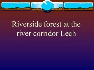Riverside forest at the river corridor Lech Riverside