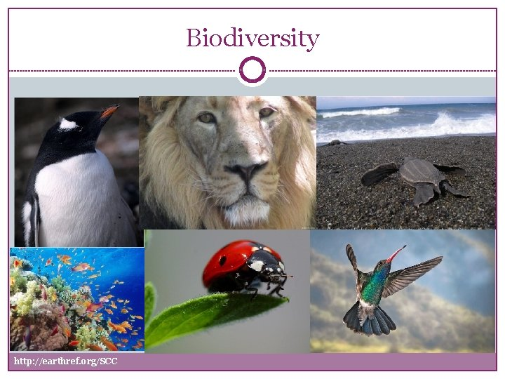 Biodiversity http earthref orgSCC Biodiversity Biodiversity refers to