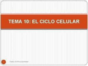 TEMA 10 EL CICLO CELULAR 1 Tema 10