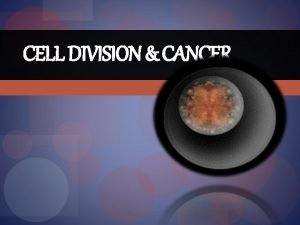 CELL DIVISION CANCER Cell Division Vocabulary somatic cell