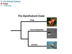 IV The Domain Eukarya E Fungi 1 Overview