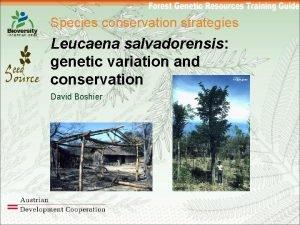 Species conservation strategies Leucaena salvadorensis genetic variation and