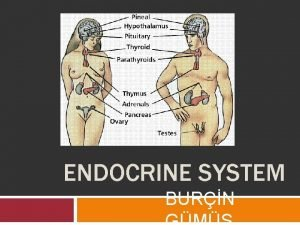 ENDOCRINE SYSTEM BURN What does the endocrine system