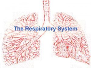 The Respiratory System Purpose of the respiratory system
