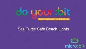 Sea Turtle Safe Beach Lights Discovering sea turtles