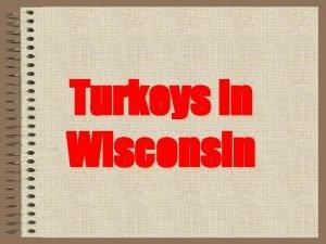 Turkeys in Wisconsin Description Wisconsins largest game bird