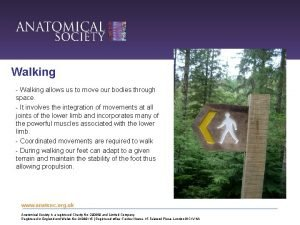 Walking Walking allows us to move our bodies