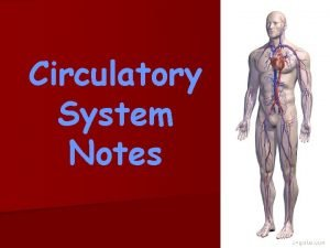 Circulatory System Notes Functions of the circulatory system