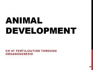 ANIMAL DEVELOPMENT 1 CH 47 FERTILIZATION THROUGH ORGANOGENESIS