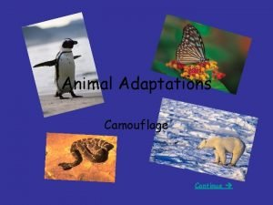 Animal Adaptations Camouflage Continue Camouflage The ability to