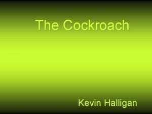 The Cockroach Kevin Halligan The Poet Kevin Halligan