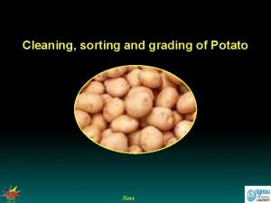 Cleaning sorting and grading of Potato Next Cleaning
