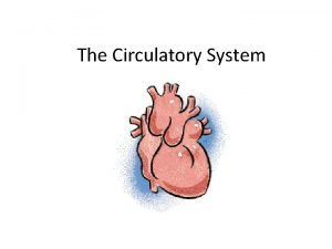 The Circulatory System Function Its main function is