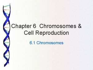 Chapter 6 Chromosomes Cell Reproduction 6 1 Chromosomes