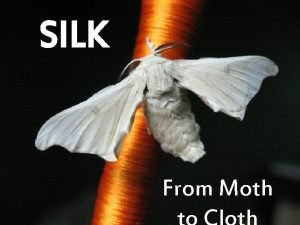 SILK From Moth The Legend The Legend XiLingShi