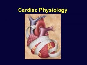 Cardiac Physiology Cardiac Physiology Anatomy Review Circulatory System