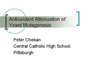 Antioxidant Attenuation of Yeast Mutagenesis Peter Chekan Central