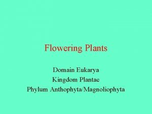 Flowering Plants Domain Eukarya Kingdom Plantae Phylum AnthophytaMagnoliophyta