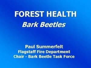 FOREST HEALTH Bark Beetles Paul Summerfelt Flagstaff Fire