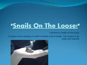 Snails On The Loose Welcome to snails on